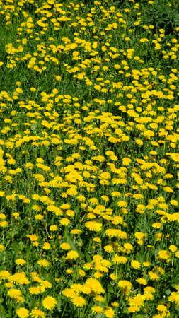 dolnoslaskie: Park in spring time