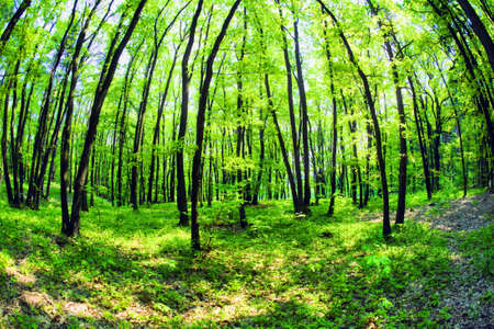 deforested: Mistical forest Stock Photo