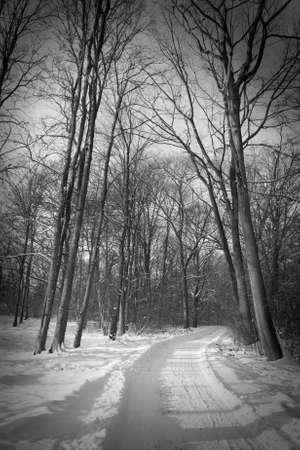 Snowy track photo