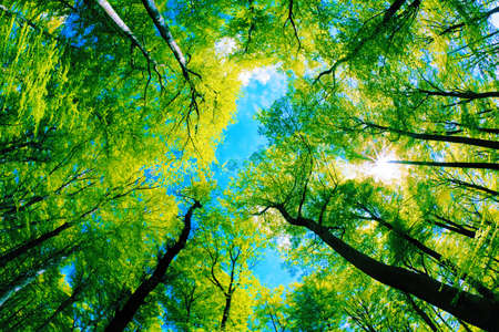 Tree canopy photo