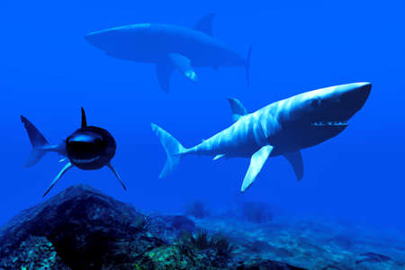 Two sharks in the Caribbean waters photo