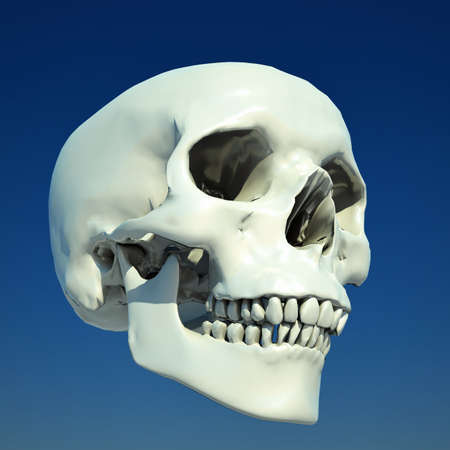 eye sockets: Human skull