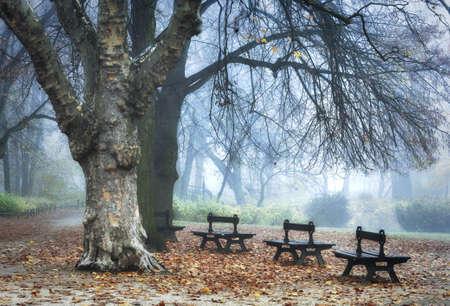 Misty park photo