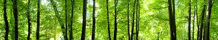 foresta: Giovane foresta