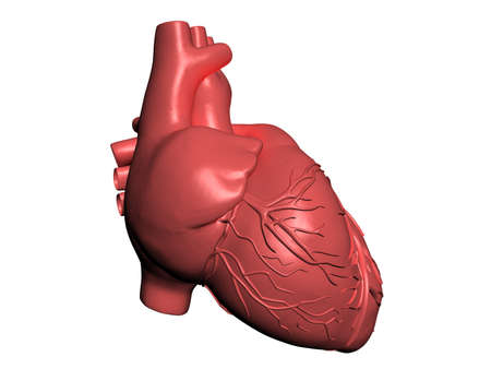 Model of human heart Stock Photo - 10308897