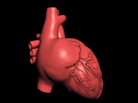 Model of human heart Stock Photo - 10308898