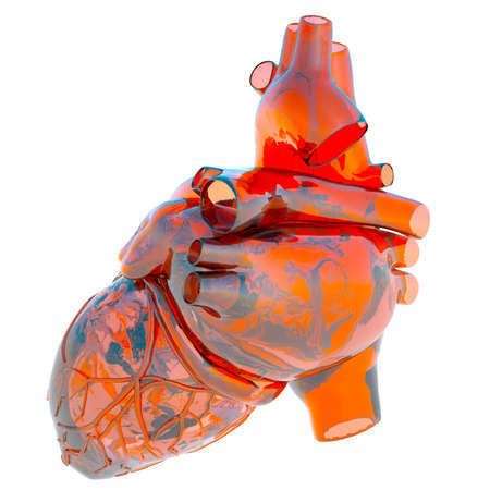 Model of human heart photo