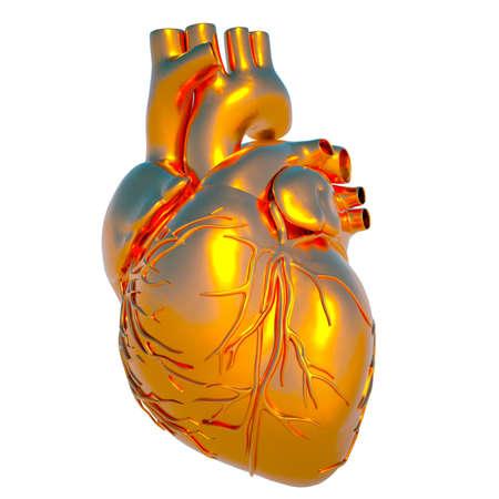 corazon humano: Modelo de coraz�n humano - coraz�n de oro Foto de archivo