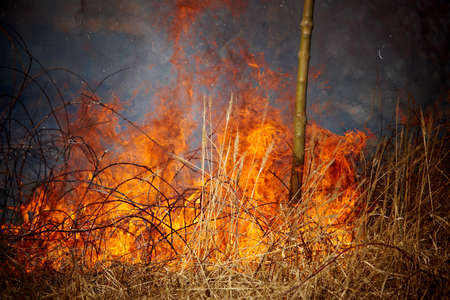 natural disaster: Grass fire Stock Photo