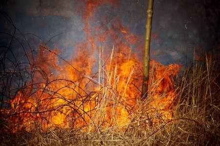 burning bush: Grass fire Stock Photo