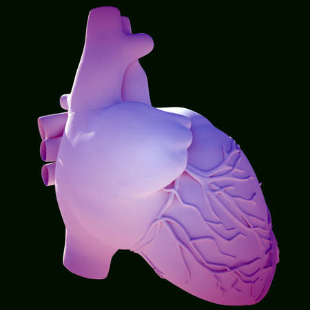 artificial model: Model of human heart Stock Photo