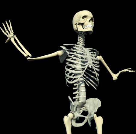 halloween skeleton: Human skeleton Stock Photo