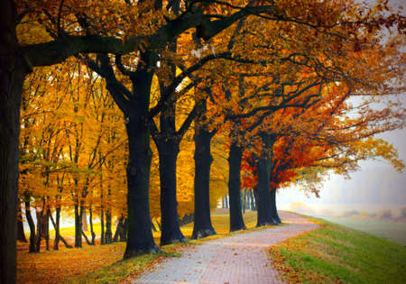 vivacious: Road in the park