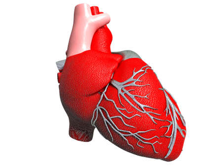 atrium: Model of artificial human heart