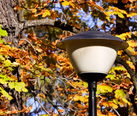 Street lamp in the park photo