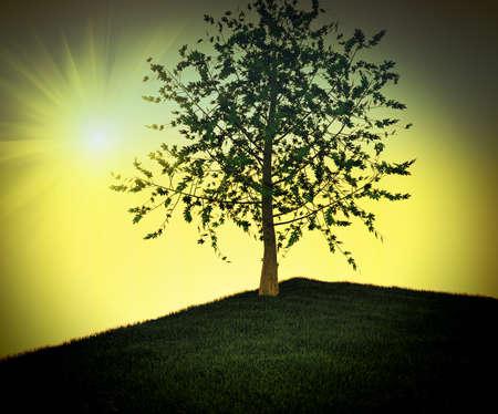 olive tree: �rbol solitario Foto de archivo