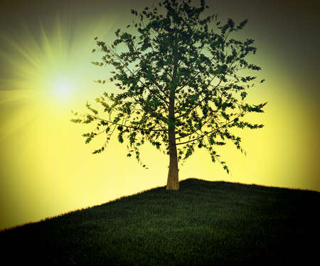 Solitary tree photo
