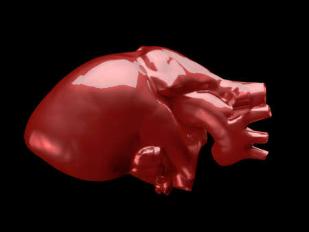 Model of human heart - heart of gold photo