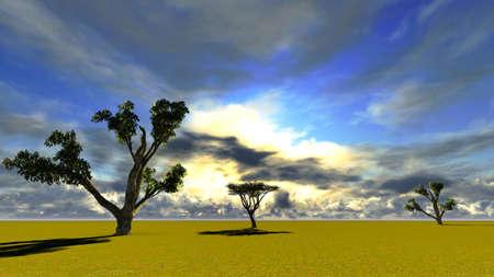 African baobab photo