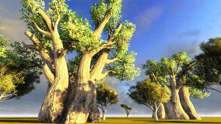 African baobab Imagens