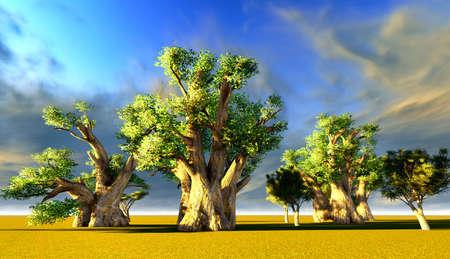 Afrikaanse baobabs