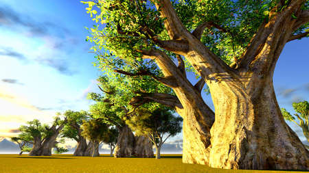 African baobabs Stock Photo - 12675434