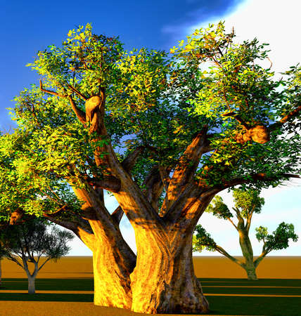 African baobabs photo