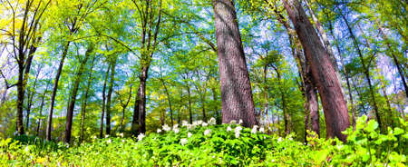 vibrance: Spring time in park Stock Photo