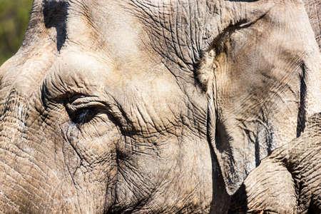 Elephant skin photo
