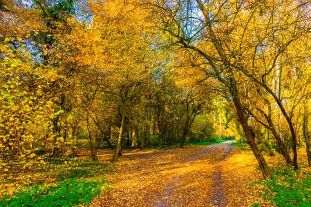 Beech forest Stock Photo - 13423760