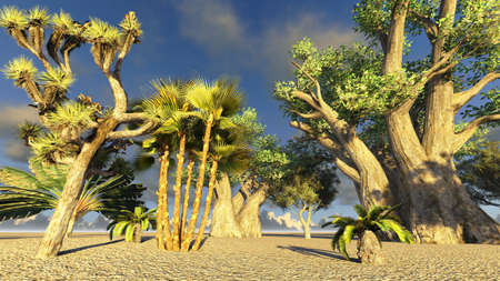 African baobabs Stock Photo - 13570190