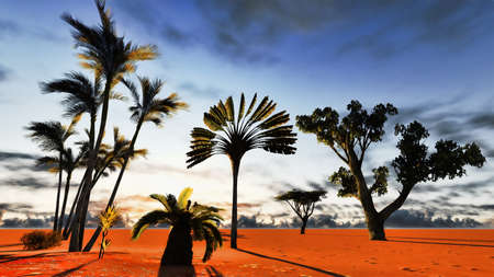 African baobabs Stock Photo - 13594623