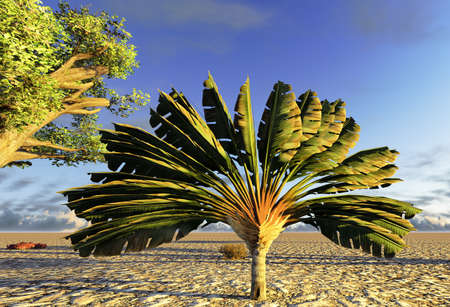 Traveller's tree (ravenala madagascariensis)