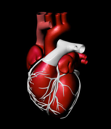 anatomy heart: Model of artificial human heart