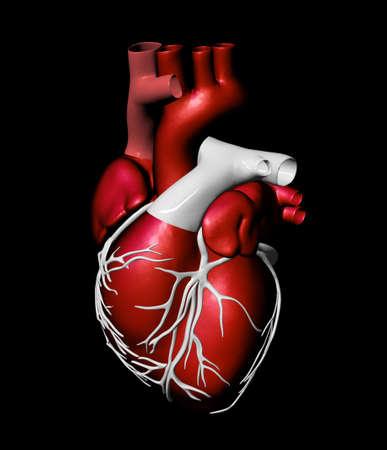 tejido: Modelo del coraz�n humano artificial Foto de archivo