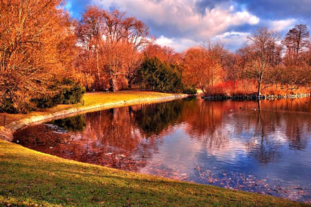 Pond in the park   Stock Photo