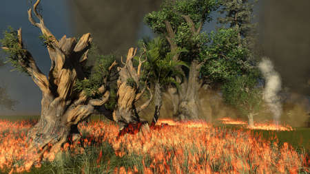 Bosbranden Stockfoto