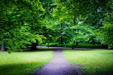 Route dans le parc Banque d'images