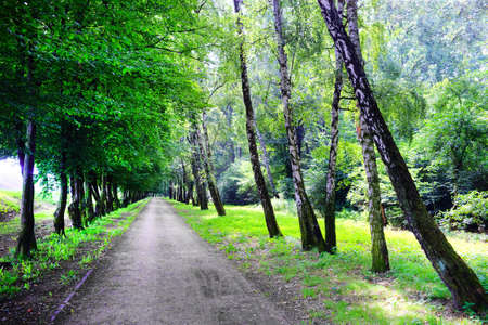 Road in the park photo