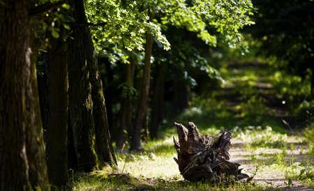 primeval forest: Primeval forest