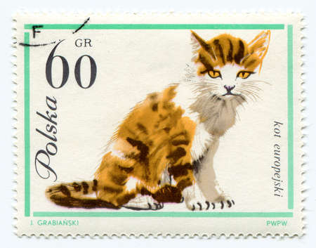 European cat on a vintage, canceled post stamp from Poland  photo