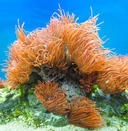 hard coral: Underwater paradise