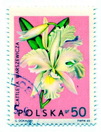orchideae: Orchidea flower
