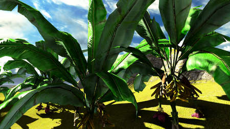 Banana trees  photo