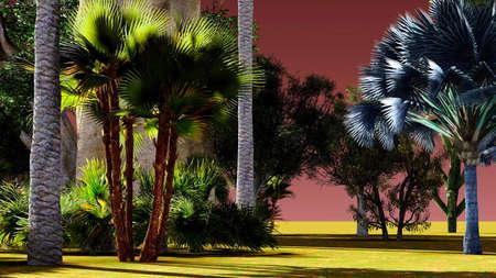 Jungle Sunset   Stock Photo