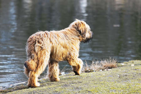 frolicking: funny dogs frolicking in the park Stock Photo