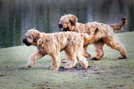 funny dogs frolicking in the park photo