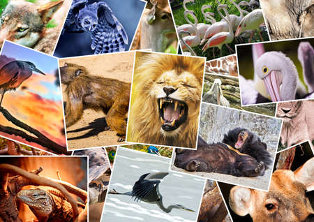 photo montage: Different animals collage Stock Photo