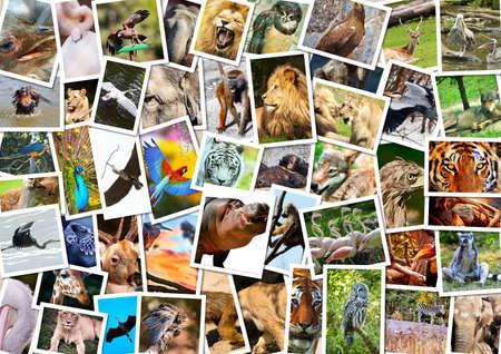 the zoo: Diferentes animales collage Foto de archivo