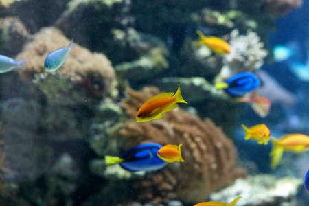 tang: Tang on reef